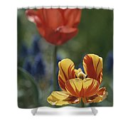 Close View Of Blossoming Tulips Shower Curtain