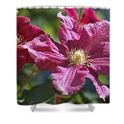 Close View Of Clematis Flowers Shower Curtain