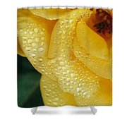 Close View Of Dew On Olympic Gold Rose Shower Curtain
