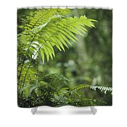 Close View Of Ferns In A Papua New Shower Curtain