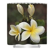 Close View Of Frangipani Flowers Shower Curtain