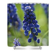 Close View Of Grape Hyacinth Flowers Shower Curtain