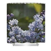Close View Of Hyacinth Lilacs Syringa Shower Curtain