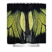 Close View Of Iridescent Moth Wings Shower Curtain