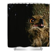 Close View Of Owl Near A Tree Trunk Shower Curtain