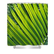 Close View Of Palm Fronds Shower Curtain