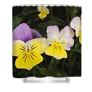 Close View Of Pansy Blossoms Shower Curtain