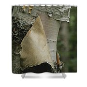 Close View Of Paper-birch Bark Shower Curtain