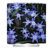 Close View Of Spring Flowers Shower Curtain