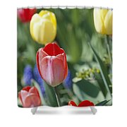 Close View Of Spring Tulips In Bloom Shower Curtain