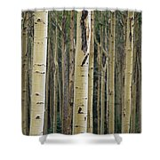 Close View Of Tree Trunks In A Stand Shower Curtain