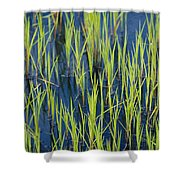 Close View Of Water Grasses Growing Shower Curtain