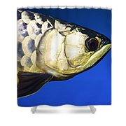 Closeup Of A Fish Shower Curtain