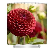 Closeup Of A Red Flower In Butchart Shower Curtain