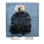 Closeup Of A Sea Otter Enhydra Lutris Shower Curtain