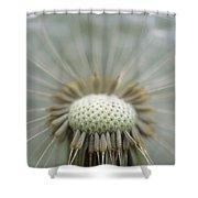 Closeup Of Dandelion Seed Head Shower Curtain