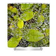 Closeup Of Morning Dew On Leaves Shower Curtain