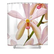 Closeup Pink Orchid Shower Curtain