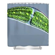 Closterium Lunula Shower Curtain by M. I. Walker