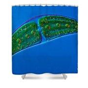 Closterium Sp. Algae Lm Shower Curtain by M. I. Walker