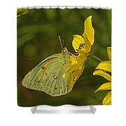Clouded Sulphur Butterfly Din099 Shower Curtain