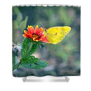 Clouded Sulphur Butterfly Square Shower Curtain