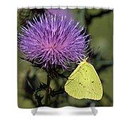 Cloudless Sulphur Butterfly Din159 Shower Curtain