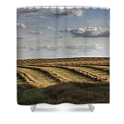 Clouds Over Canola Field On Farm Shower Curtain