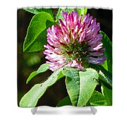Clover Blossom Day Shower Curtain