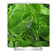 Clover Jewels Shower Curtain