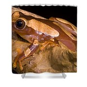 Clown Tree Frog Shower Curtain