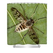Cluster Fly Killed By Parasitic Fungus Shower Curtain