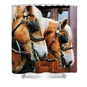 Clydesdale Closeup Shower Curtain