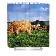 Co Antrim, Ireland Highland Cattle Shower Curtain