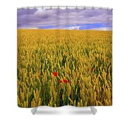 Co Waterford, Ireland Poppies In A Shower Curtain