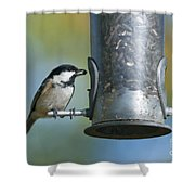 Coal Tit On Feeder Shower Curtain