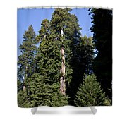 Coast Redwood Shower Curtain