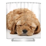 Cockapoo Pup Shower Curtain