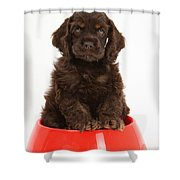 Cocker Spaniel Pup In Doggy Dish Shower Curtain