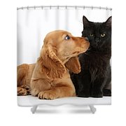Cocker Spaniel Puppy And Maine Coon Shower Curtain