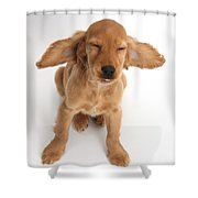 Cocker Spaniel Puppy Making A Face Shower Curtain