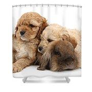 Cockerpoo Puppies And Rabbit Shower Curtain