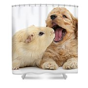 Cockerpoo Puppy And Guinea Pig Shower Curtain