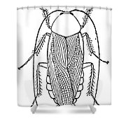 Cockroach Shower Curtain
