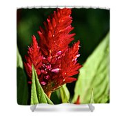 Cockscomb Shower Curtain