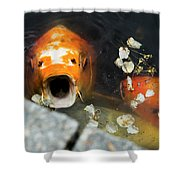 Cocky Catskills Koi Shower Curtain
