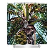 Coconut Palm Inflorescence Shower Curtain by Karon Melillo DeVega