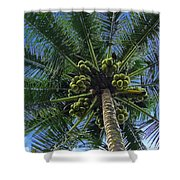 Coconut Palm Shower Curtain