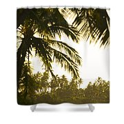 Coconut Palm Trees On The Coast Shower Curtain