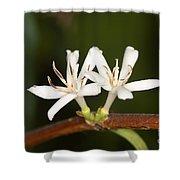 Coffee Flowers Shower Curtain